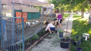 Neighbors plant trees and plants at the Cheltenham Community Garden